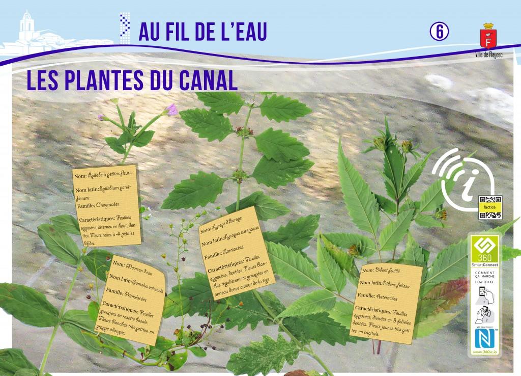 6 Les plantes du canal